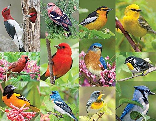 Springbok Birds of a Feather Jigsaw Puzzle